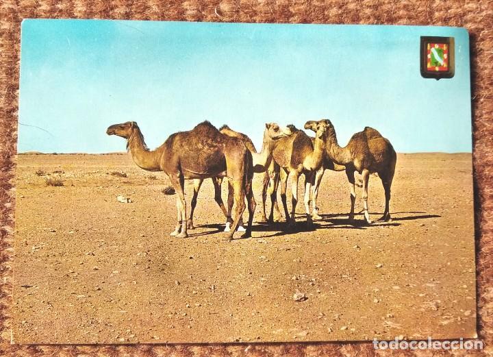 AAIUN - SAHARA ESPAÑOL (Postales - España - Sin Clasificar Moderna (desde 1.940))
