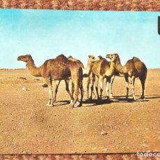 Postales: AAIUN - SAHARA ESPAÑOL. Lote 220496722