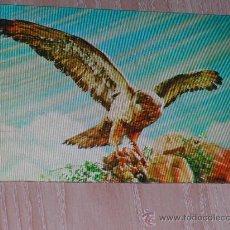 Postales: POSTAL EN 3D ( TRIDIMENSIONAL ) - AÑOS 60/70 - AGUILA. Lote 17232643
