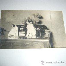 Postales: POSTAL FOTOGRAFICA TELEFONICA NACIONAL DE ESPAÑA VALENCIA RIADA 1957 RARO DOCUMENTO. Lote 28813823
