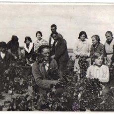 Postales: BONITA FOTOGRAFIA TARJETA POSTAL DE UNA FAMILIA EN UNOS VIÑEDOS. . Lote 29740653