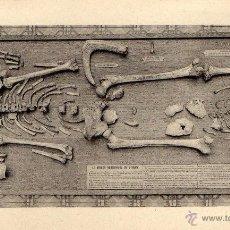 Postales: POSTAL DE MUSEO DE HISTORIAS NATURALES DE BRUSELAS. Lote 40430496