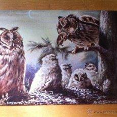 Postales: ANTIGUA POSTAL BRITISH BIRDS - LONG EARED OWLS - PAJAROS BRITANICOS - TUCKS POST CARD SERIE II. Lote 44109542