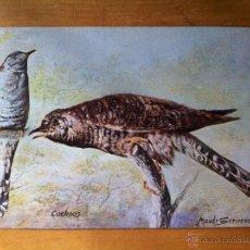 Postales: ANTIGUA POSTAL BRITISH BIRDS - PAJAROS BRITANICOS - CUCKOOS - TUCKS POST CARD SERIE II. Lote 44109578