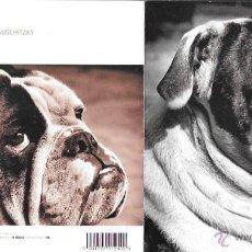 Cartes Postales: FELICITACIÓN DÍPTICO * BULLDOG * ENGLAND. Lote 49767445