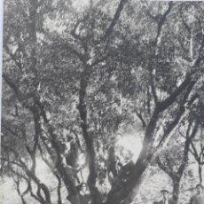 Postales: P-1886. POSTAL FOTOGRAFICA INGLESA DE GRUPO. AÑOS VEINTE.. Lote 50134250