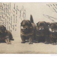 Postales: ANTIGUA TARJETA POSTAL PERROS - CACHORROS - SERIE 1129 Nº 6 - 1903 - REVERSO SIN DIVIDIR. Lote 73823799