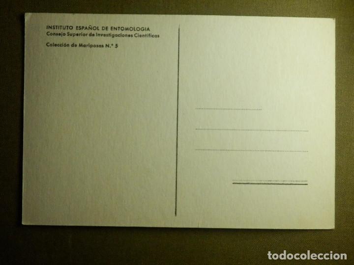 Postales: POSTAL - CUATROCOLAS - COLECCION DE MARIPOSAS Nº 5 - INSTITUTO ESPAÑOL DE ENTOMOLOGÍA - - Foto 2 - 88085136