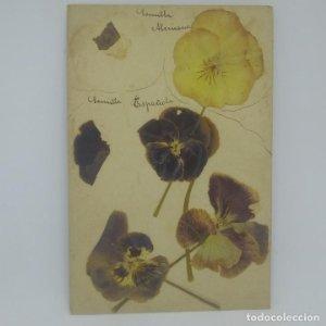 Lote de 3 conjuntos de flores secas. F. Cruells Semilla Española Semilla Alemana (ver fotos)