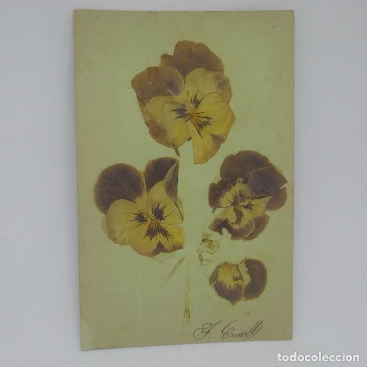Lote de 3 conjuntos de flores secas. F. Cruells Semilla Española Semilla Alemana (ver fotos) - 147774122