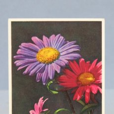 Postales: POSTAL. CHALISTEPUS CHINENSIS. SUIZA. FLORES. 185. Lote 155988758
