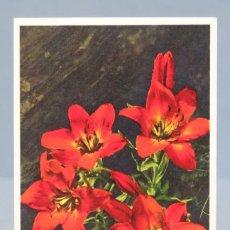 Postales: POSTAL. LILIUM BULBIFERUM. SUIZA. FLORES. 795. Lote 155988822