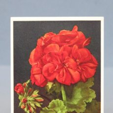 Postales: POSTAL. GERANIUM. SUIZA. FLORES. 12. Lote 155989106