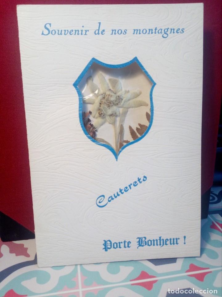 POSTAL SIN CIRCULAR AUTÉNTICA FLOR DE NIEVE (EDELWEIS) CAUTERETS - PIRINEO (AÑOS 70) - REF: 189/199 (Postales - Postales Temáticas - Especiales)