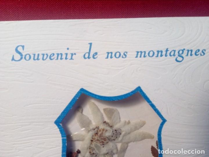 Postales: POSTAL SIN CIRCULAR AUTÉNTICA FLOR DE NIEVE (EDELWEIS) CAUTERETS - PIRINEO (AÑOS 70) - REF: 189/199 - Foto 4 - 217407672