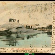 Postales: BALLENA - NORUEGA - VED EN HVALSTATION - 1904. Lote 171437269