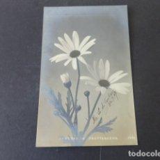 Postales: MARGARITAS POSTAL . Lote 175451989