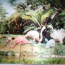 Postales: 3D PRECIOSA POSTAL DE VIRGEN DE ANIMALES. Lote 194360636