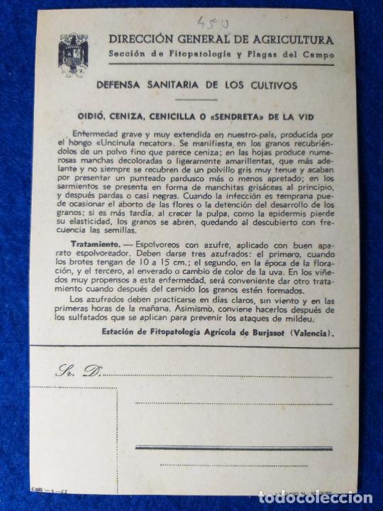 Postales: POSTAL. DIRECCION GENERAL DE AGRICULTURA. PLAGAS. OIDIO CENIZA, SENDRETA DE LA VID, VILADOT - Foto 2 - 214442643