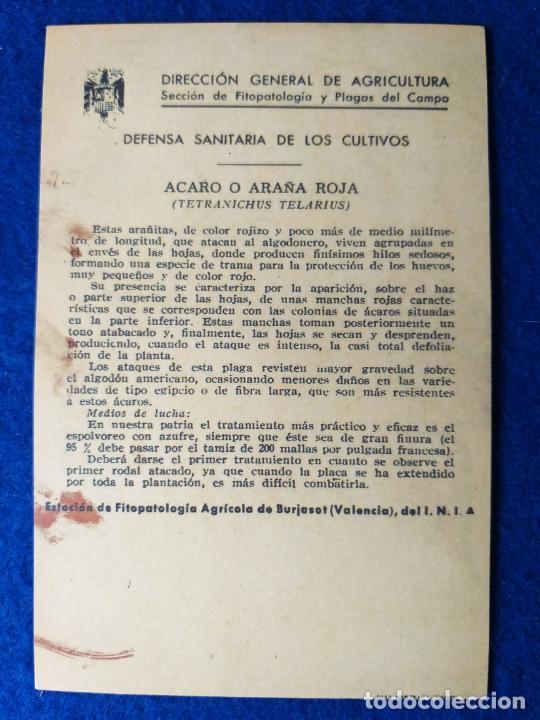 Postales: POSTAL. DIRECCION GENERAL DE AGRICULTURA. PLAGAS. ACARO O ARAÑA ROJA - Foto 2 - 214461882