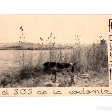 Postales: EL S.O.S. DE LA CODORNIZ. ESCENA DE CAZA. FELICIDADES 1961.. Lote 225203725