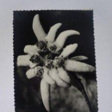 Postales: POSTAL CPSM, EDELWEISS, FLOR DE NIEVE, VER FOTOS. Lote 243630455