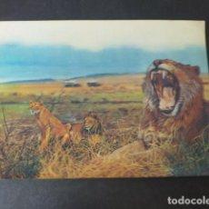 Postales: LEONES Y TIGRES POSTAL 3 DIMENSIONES 3D. Lote 275198888