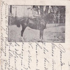 Cartoline: MONARQUIA, EL REY ALFONSO XIII EN EL RETIRO DE MADRID. VER REVERSO, SIN DIVIDIR. CIRCULADA EN 1906. Lote 286849348