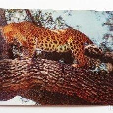 Postales: POSTAL 3D - LEOPARDO - TOPPAN. Lote 296629083