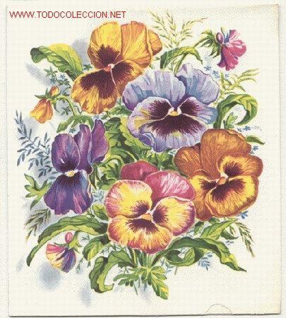 preciosa postal doble bonitas flores surge un hermoso ramo de pensamientos al abrise