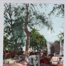 Postales: COSTUMBRES ANDALUZAS.- HORTELANOS. EDIT. TOMÁS SANZ Nº 136. ANTERIO A 1906.. Lote 14879910