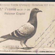 Postales: POSTAL REPRODUCIENDO LA PALOMA MENSAJERA GANADORA DEL CONCURSO CELEBRADO EN 1927. Lote 15917296
