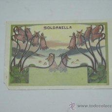 Cartes Postales: POSTAL MODERNISTA SOLDANELLA . ILUSTRADOR C. HOFER . SIN CIRCULAR , SIN DIVIDIR .. Lote 18992182