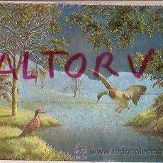 Postales: POSTAL A COLOR Nº 37 WARREN ESCRITA TEMA OCAS POSTAL INGLESA. Lote 21707572