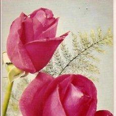 Postales: POSTAL A COLOR 4 FLORES ROSA DE FRANCIA BERGAS INDUSTRIAS GRAFICAS. Lote 23685611