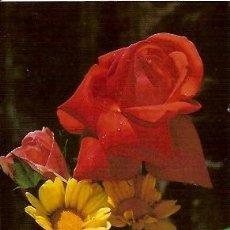 Postales: POSTAL A COLOR CYZ 7633 29 B TEMA FLORES ROSAS. Lote 25389419