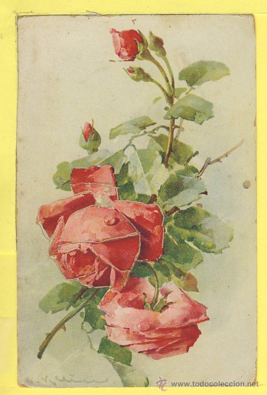 Postales Dibujos Flores Y Plantas Ilustracion Comprar Postales