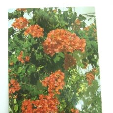 Postales: POSTAL CIRCULADA HOLANDA - BUGANVILLA COLOR NARANJA. Lote 31186003