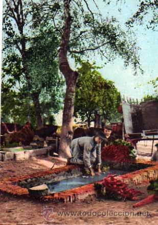 POSTAL AÑO 1906 COSTUMBRES ANDALUZAS HORTELANOS COLECCION TOMÁS SANZ SEVILLA 136 SIN CIRCULAR (Postales - Postales Temáticas - Estilo)