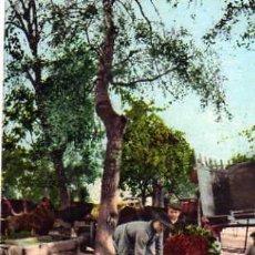 Postales: POSTAL AÑO 1906 COSTUMBRES ANDALUZAS HORTELANOS COLECCION TOMÁS SANZ SEVILLA 136 SIN CIRCULAR . Lote 32495931