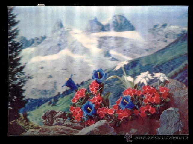 PK-92 - ALPINE PLANTS. PLANTAS ALPINAS - CIRCULADA 1971. (Postales - Postales Temáticas - Estilo)