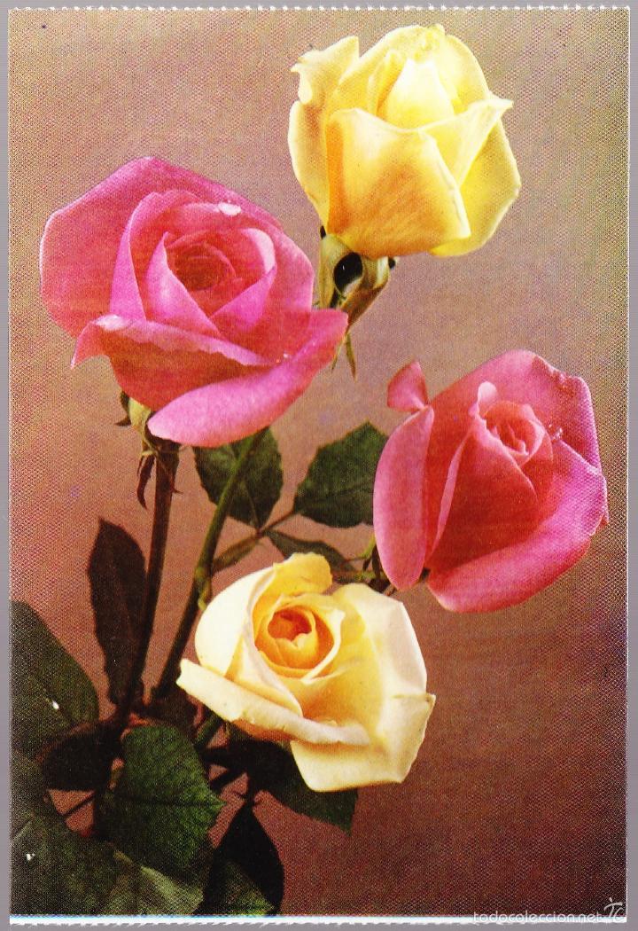 FLORES ROSA DE FRANCIA MADAME BUTERFLY GRAFICAS BERGAS (Postales - Postales Temáticas - Estilo)