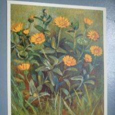 Postales: POSTAL SUIZA FLORES 214 COMPOSITAE CALENTURA ARBENSIS. Lote 114987299