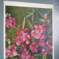 Postales: POSTAL SUIZA FLORES 212 PAPILIONACEAE LATHYRUS LATIFOLIUS. Lote 115086759