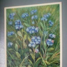 Postales: POSTAL ANTIGUA FLORES SUIZA 17 BORAGINEAE MYOSOTIS ARVENSIS. Lote 116396015