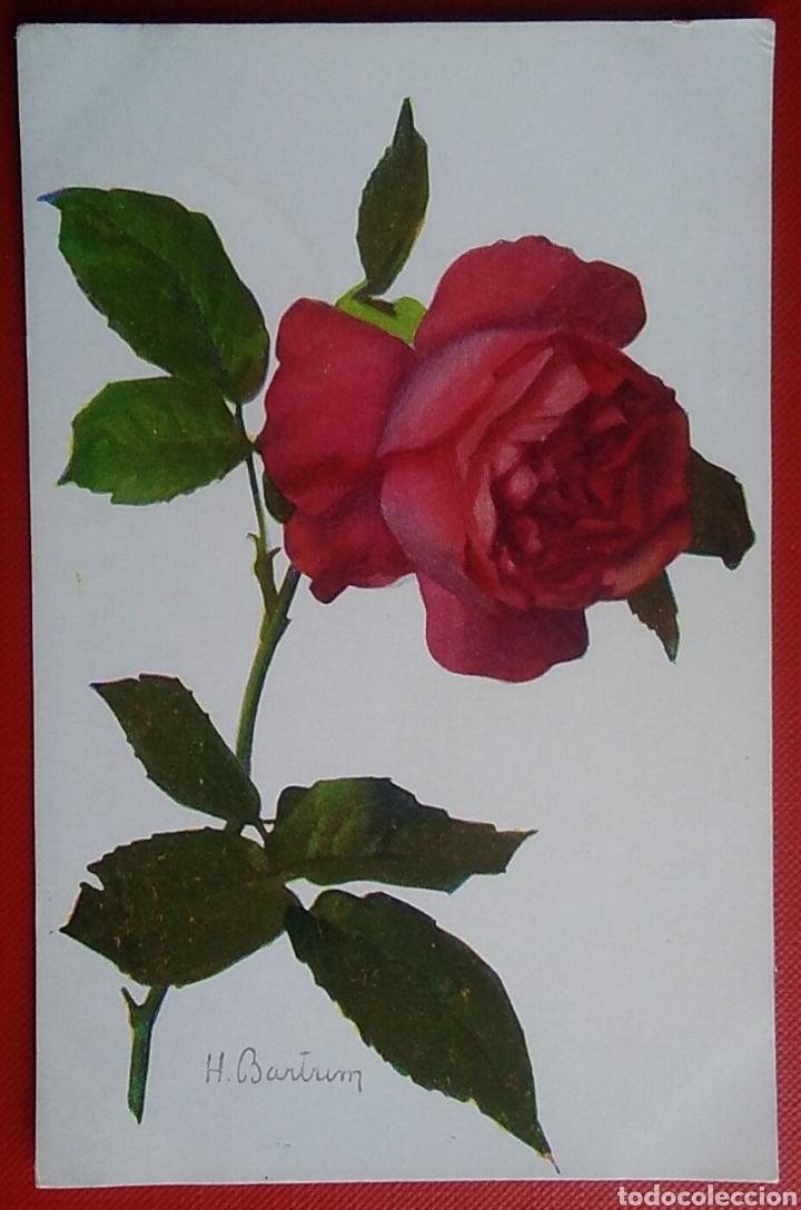 POSTAL FRANCIA FLORES ROSA 557 ROSE HYBRID RED ROSE ROSA ROSSA (Postales - Postales Temáticas - Estilo)