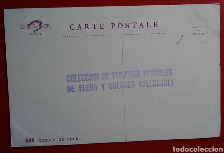 Postales: Postal Francia flores 588 gueule de loup - Foto 2 - 151454626