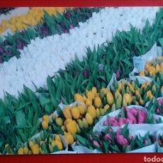 Postales: BONITA POSTAL HOLANDA TULIPANES FLORES. Lote 154388749