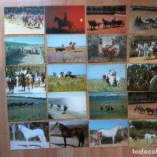 Postales: POD1- LOTE DE 38 POSTAL DE TEMAS CABALLOS Y TOROS. Lote 155275630