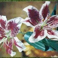 Postales: POSTAL FOTOGRÁFIA ARTÍSTICA. Lote 188668590